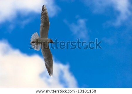 Seagull flying on blue sky with white clouds - stock photo
