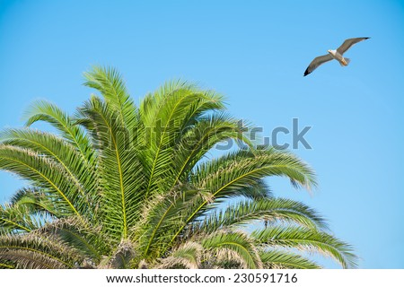 seagull flying over a palm tree on a clear day - stock photo