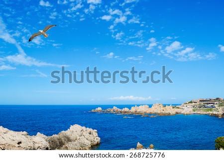 seagull flying over Costa Paradiso rocky shore - stock photo