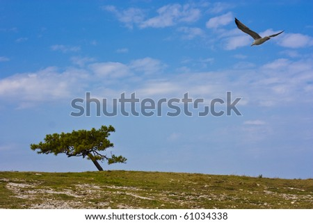 Seagull flying over rocky meadow on beach with pine tree in croatia - stock photo