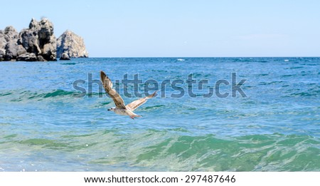 Seagull flying over the ocean swell with a rocky headland visible in the distance on a sunny summer day