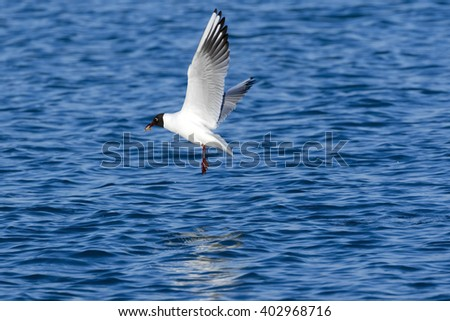 Seagull flying over the sea - stock photo