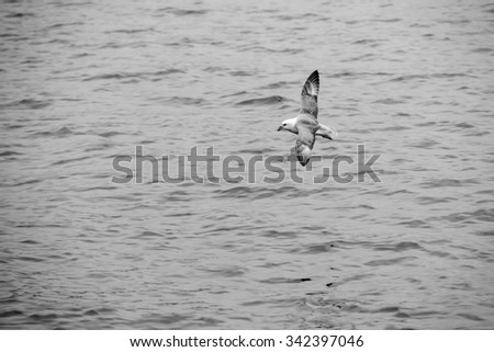 Seagull flying over the sea in black and white