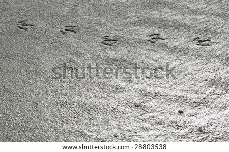 seagull footprints in the sand - stock photo
