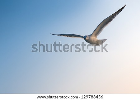 Seagull front of blue sky - stock photo