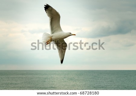 Seagull front of the sky - stock photo