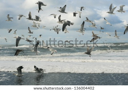 Seagull group in Oregon seaside - stock photo