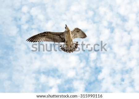 Seagull hovering in the sky, wings spread and tail on the background of sky and clouds - stock photo