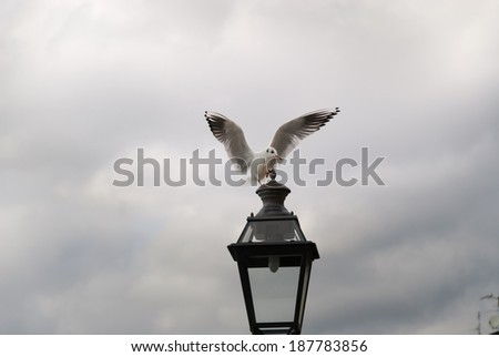 Seagull hovering over a lamppost  - stock photo