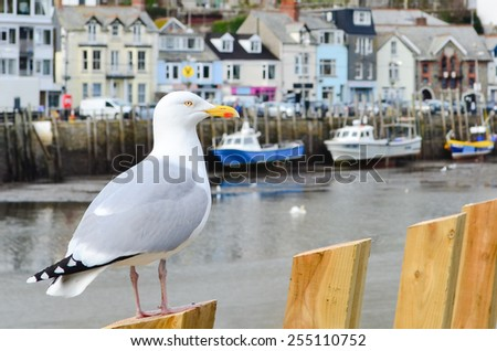 Seagull in a typically British seaside town setting, Looe, Cornwall - stock photo