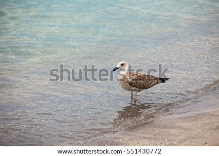 Seagull  in beach cloce up