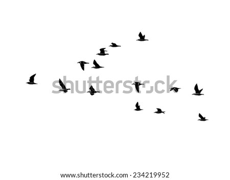 seagull in flight on a white background - stock photo