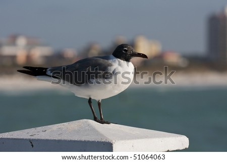 Seagull in Florida, Tampa bay. - stock photo