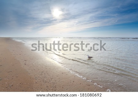 seagull in North sea waves on sand sunny beach, Holland - stock photo