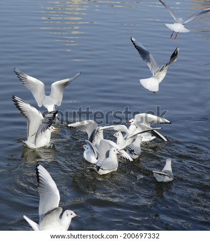Seagull is flying - stock photo
