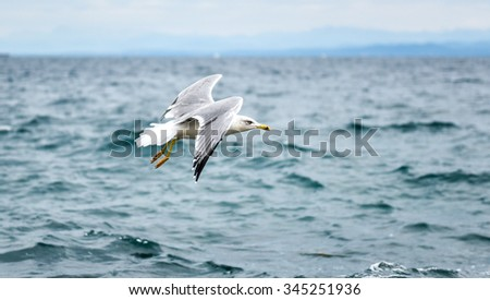 Seagull is flying and soaring in over the sea and waves in the storm - stock photo