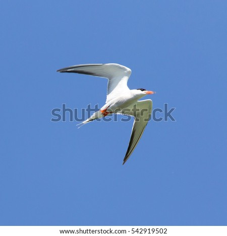 seagull on a background of blue sky