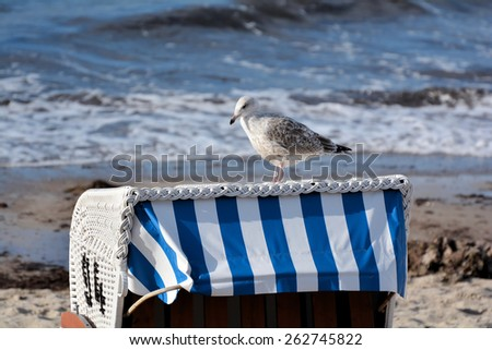 seagull on a beach chair - stock photo
