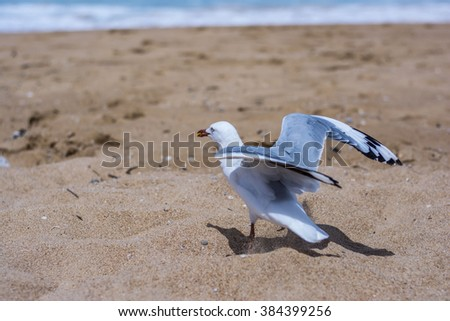 Seagull on a beach in New South Wales, Australia - stock photo