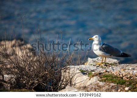 Seagull on a rock by the sea.