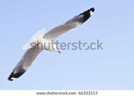 seagull on beautiful blue sky - stock photo