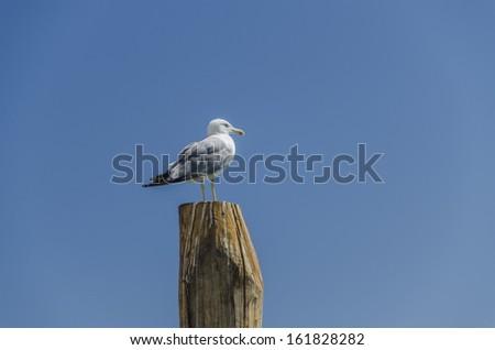 seagull on blue sky - stock photo