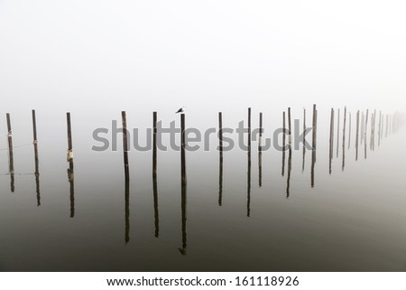 Seagull on Pilings in deep fog - stock photo