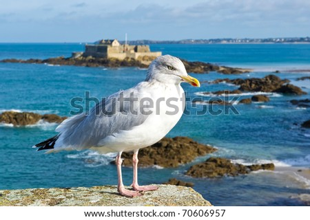 Seagull on the rampart of St Malo - stock photo