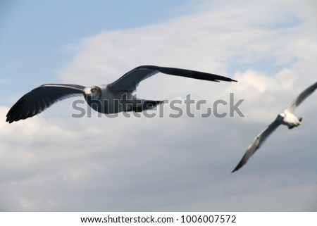 Seagull on the sea
