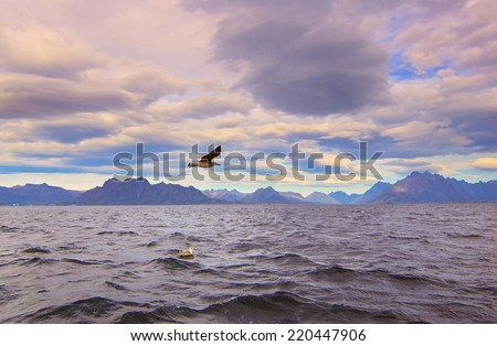Seagull over Norwegian sea - stock photo