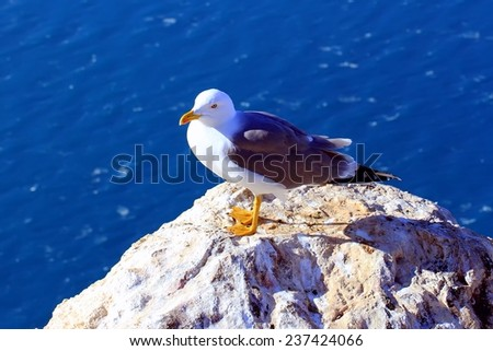 Seagull over the cliff of Calpe beach. - stock photo