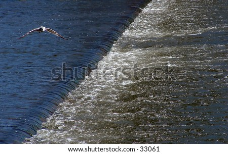 seagull over the Grand River - stock photo