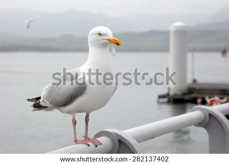 Seagull perched on a pier handrail - stock photo