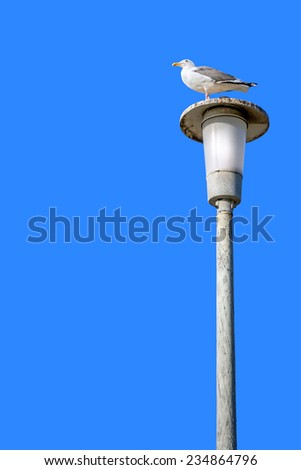 Seagull perched on tall light post with clear blue sky background. Weathered gray metal pole. Room for text, copy space. Vertical composition.  - stock photo
