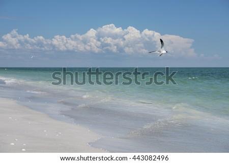 Seagull Sailing over Sanibel Seashore - stock photo