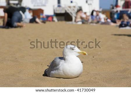 Seagull sat on Broadstairs beach in the sun, Kent - stock photo