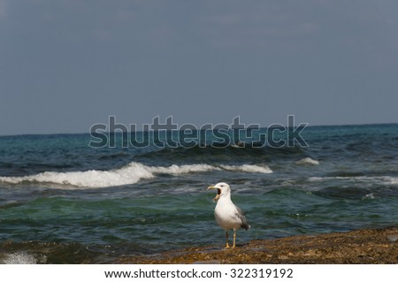 seagull shouting, calling their relatives flying somewhere not far from the sea - stock photo
