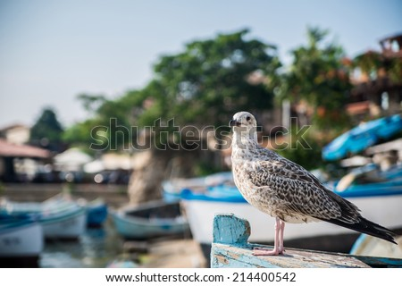 Seagull sitting on the boat - stock photo