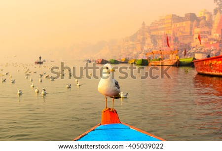 stock-photo-seagull-sitting-on-the-boat-