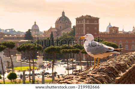 Seagull sitting on the ruins of Trajan's Market in Rome at sunset. View of the Piazza Venezia. - stock photo