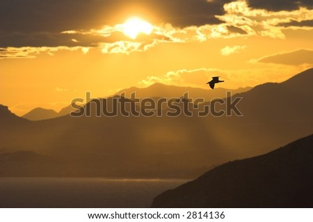 Seagull soaring high above the sea at dawn. - stock photo