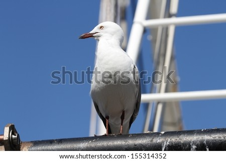 Seagull standing on a boat mast. - stock photo