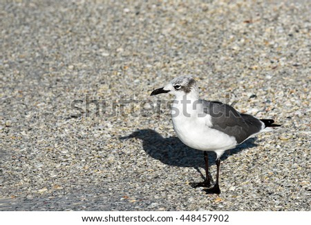 Seagull standing on the Beach - stock photo