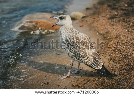 seagull with an open beak on beach