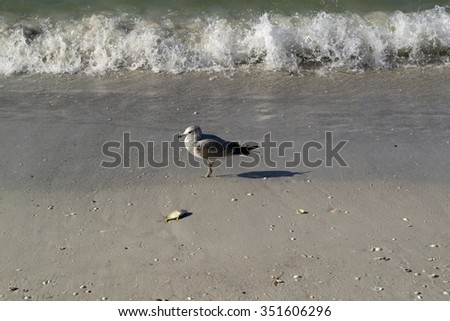 Seagull with fish on tropical beach - stock photo