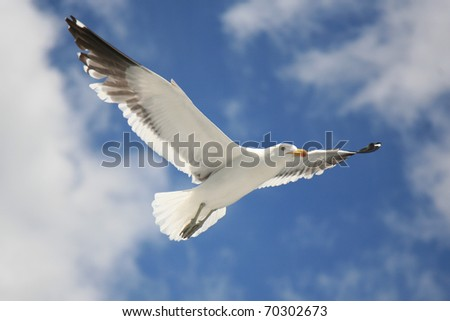 Seagull with spread wings in flight against blue and cloudy sky