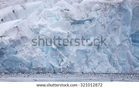 Seagulls feeding near glacier wall â?? Franz Josef Land - stock photo