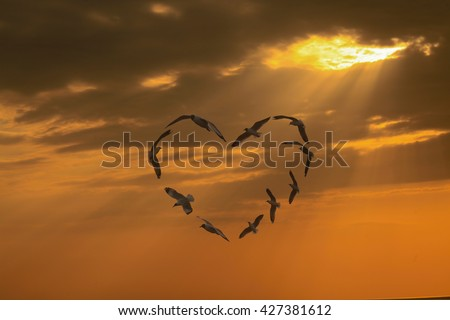Seagulls fly Group card stunt the heart under orange sky and sun beams through the cloud background. isolated with clipping path. - stock photo