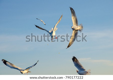 Seagulls fly in the mangrove forest.