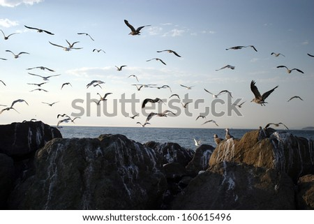 Seagulls fly over jetty rocks near Fort Warden State Park in Port Townsend, Washington.